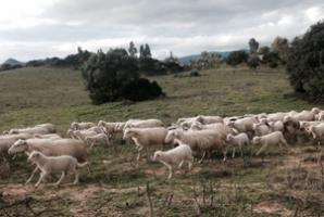 RAI 1 LINEA VERDE – IL FUTURO AGRICOLO DELLA SARDEGNA
