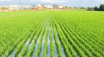 L'UNITÀ D'ITALIA È STATA FATTA CON LE INNOVAZIONI IN AGRICOLTURA