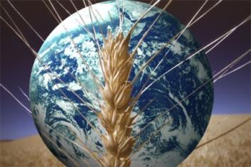 Il cibo del mondo